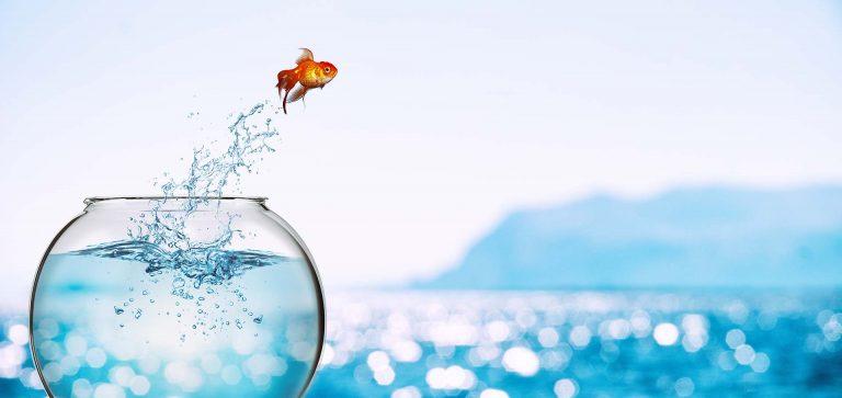 Spring ins kalte Wasser