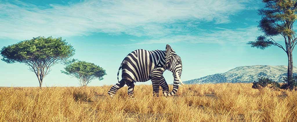 zebraelefant