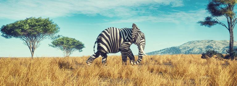 Elefant mit Zebrastreifen - so verrückt wie 2020